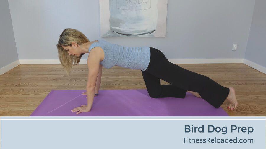 bird dog exercise prep