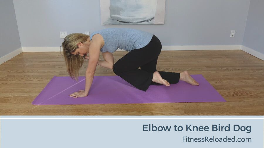 elbow to knee bird dog exercise variation